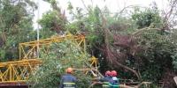 民政总署清理颱风期间塌树及垃圾 - 新闻局